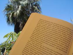 Buddenbrooks unter Palmen