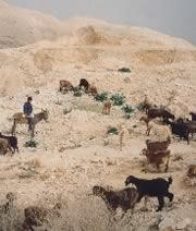 Beduinenmarkt