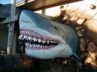 Haie schon in Häusern