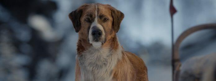 Voll digital: Filmhund Buck in »Ruf der Wildnis« (Foto: 20th Century Studios/Disney)