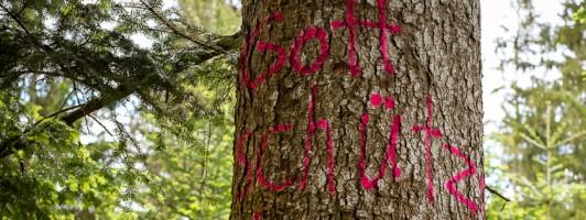 Grafito nahe Baiersbronn: »Gott schütze diesen Wald« (Foto: Birgit-Cathrin Duval)