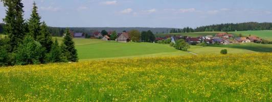 Seminar im Schwarzwald: Schreiben und (selbst) veröffentlichen 1