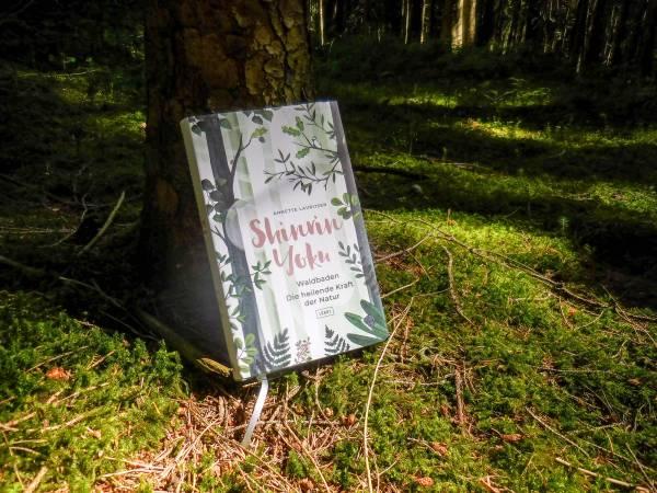 Waldbaden: Du kommt anders aus dem Wald heraus, als du ihn betreten hast