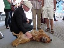 Der Jury-Vorsitzende Burkhard Spinnen krault einen Hund