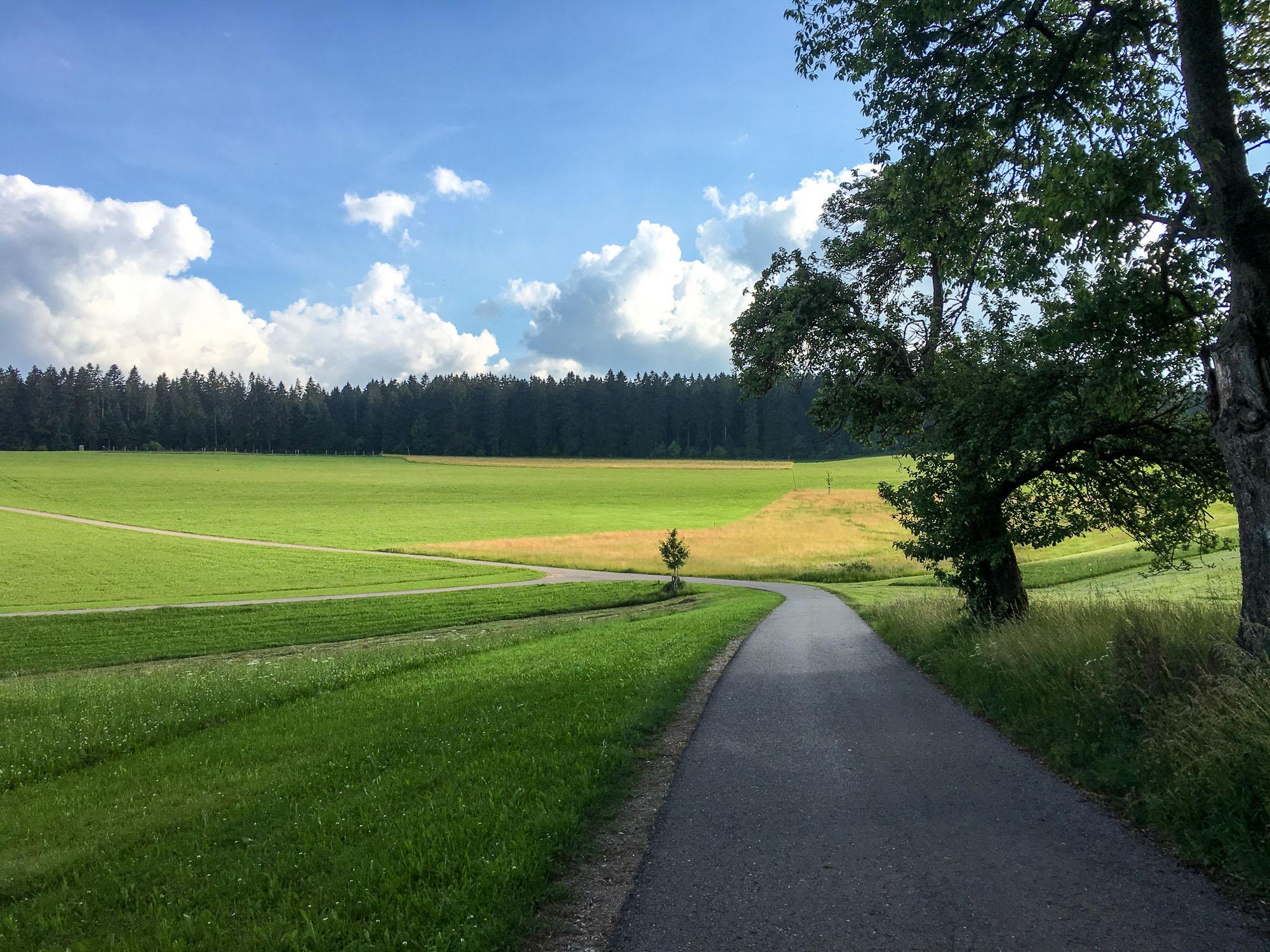 Waldbaden: Du Kommst Anders Aus Dem Wald Heraus, Als Du